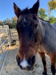 Horse named Zak